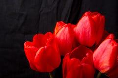 Bukett av röda tulpan Fotografering för Bildbyråer