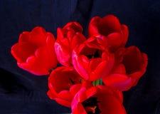 Bukett av röda tulpan Royaltyfria Bilder