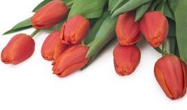 Bukett av röda tulpan, kopieringsutrymme Fjädra nya blommor, modellen för kort för hälsning för moderdag, valentin- eller bröllop Royaltyfria Foton