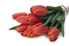 Bukett av röda tulpan, kopieringsutrymme Fjädra nya blommor, modellen för kort för hälsning för moderdag, valentin- eller bröllop Arkivbild