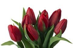 Bukett av röda tulpan, kopieringsutrymme Fjädra nya blommor, modellen för kort för hälsning för moderdag, valentin- eller bröllop Arkivfoton