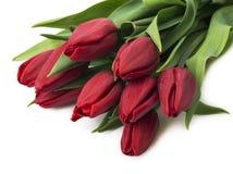 Bukett av röda tulpan, kopieringsutrymme Fjädra nya blommor, modellen för kort för hälsning för moderdag, valentin- eller bröllop Arkivbilder
