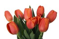 Bukett av röda tulpan, kopieringsutrymme Fjädra nya blommor, modellen för kort för hälsning för moderdag, valentin- eller bröllop Arkivfoto