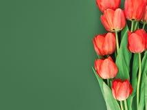 Bukett av röda tulpan på grön bakgrund med utrymme för text Royaltyfri Bild