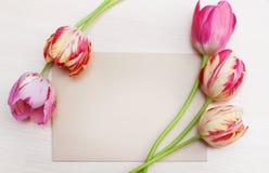 Bukett av röda tulpan på vit bakgrund med utrymme för text Royaltyfri Foto