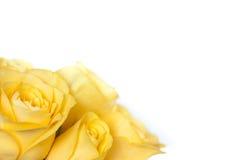 Bukett av gula ro Royaltyfria Foton