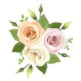 Bukett av rosa och orange ro också vektor för coreldrawillustration Royaltyfria Bilder
