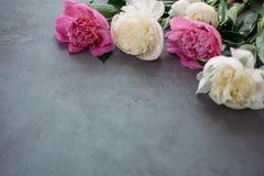Bukett av rosa och vita pioner på grå bakgrund Royaltyfri Foto