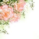 Bukett av rosa rosor, flora Royaltyfria Foton