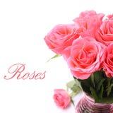 Bukett av rosa rosor i vas på den vita bakgrunden (med lätt löstagbar text) Royaltyfria Bilder