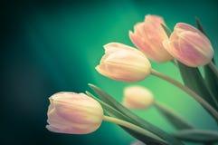 Bukett av rosa tulpan Fotografering för Bildbyråer