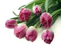 Bukett av rosa tulpan, kopieringsutrymme Fjädra nya blommor, modellen för kort för hälsning för moderdag, valentin- eller bröllop Arkivfoton