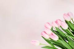 Bukett av rosa tulpan på abstrakt rosa bakgrund Bästa sikt, Co Fotografering för Bildbyråer
