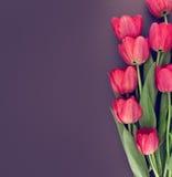Bukett av rosa tulpan på kulör bakgrund Arkivfoto
