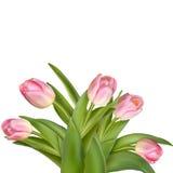 Bukett av rosa tulpan som isoleras över vit 10 eps Arkivbild