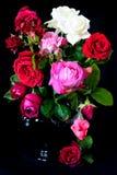 Bukett av rosor Royaltyfri Foto