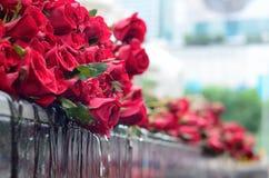 Bukett av rosor Royaltyfria Bilder