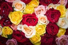 Bukett av rosor med daggdroppar Arkivbilder
