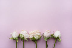 Bukett av rosor på en rosa bakgrund med stället för din text Royaltyfri Bild