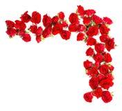 Bukett av rosor som är ordnade till formen av en gräns- eller designbeståndsdel för blom- teman royaltyfri foto