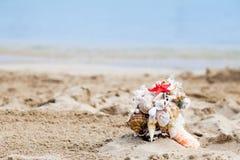 Bukett av snäckskal på den sandiga kusten Arkivfoton