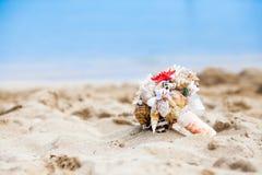 Bukett av snäckskal på den sandiga kusten Arkivbild