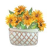 Bukett av solrosor i en korg royaltyfri illustrationer