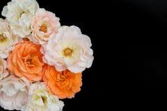 Bukett av svart bakgrund för rosor, lekmanna- lägenhet Arkivbild
