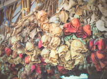 Bukett av torkade dörosor Arkivfoto