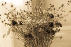 Bukett av torkade vildblommor med stil för tappning för filtereffekt retro Royaltyfri Fotografi
