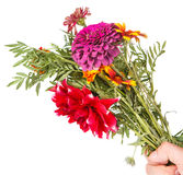 bukett av trädgårds- blommor Royaltyfria Bilder