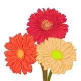 Bukett av tre färgrika gerberas tecknad hand Royaltyfri Fotografi