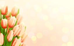 Bukett av tulpan med kopieringsutrymme för meddelande Valentin dag a Arkivfoto