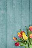 Bukett av tulpan på blå Wood plankabakgrund Royaltyfri Bild
