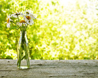 Bukett av tusenskönor i en flaska Royaltyfria Bilder