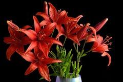 Bukett av våta röda liljablommor Arkivbild