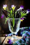 Bukett av vaniljfröskidor Royaltyfria Foton