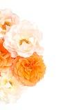 Bukett av vit bakgrund för rosor, lekmanna- lägenhet Royaltyfri Foto