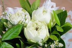 Bukett av vit lotusblomma Royaltyfria Bilder