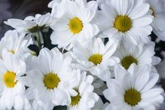 Bukett av vita blommor tätt upp arkivfoto