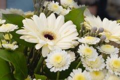 Bukett av vita Gerberablommor Royaltyfria Foton
