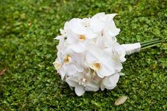 Bukett av vita orkidér Arkivfoto