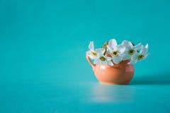 Bukett av vita påskliljor i orange vas white för blommaskogfjäder Narci Royaltyfria Bilder