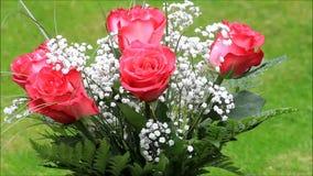 Bukett för röda rosor med den vita gypsophilaen lager videofilmer