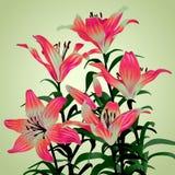 Bukett från liljor Royaltyfria Bilder