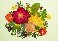 Bukett på ljus bakgrund Bild från torra blommor Arkivfoton