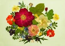 Bukett på ljus bakgrund Bild från torra blommor Arkivfoto