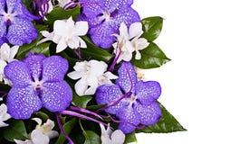 bukett vita isolerade orchids Royaltyfri Fotografi