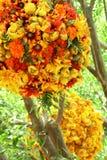 bukettblomma Royaltyfria Bilder