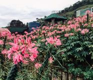 Buketten av blommor är aldrig nog royaltyfria foton